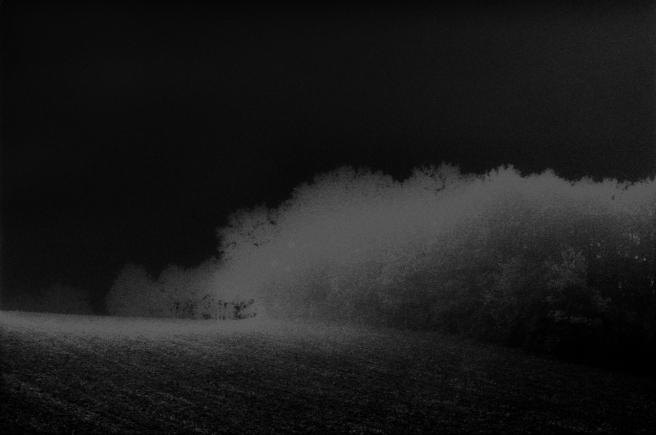Brume à l'orée d'un champ solarisé