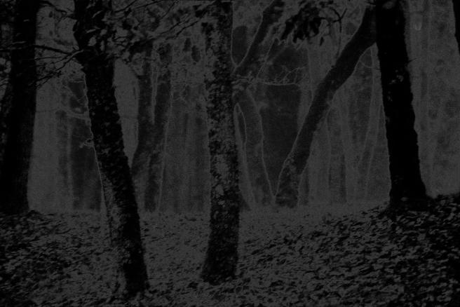 Brume dans le sous bois solarisé