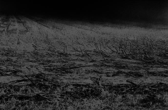 Brume sur champ de maïs solarisé