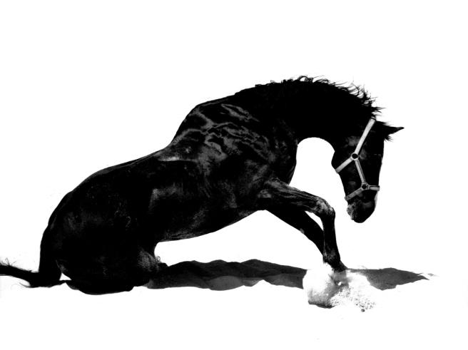 Caligraphie Animale 1(60x80)